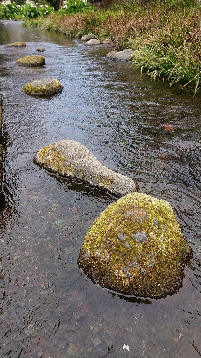 苔むした石
