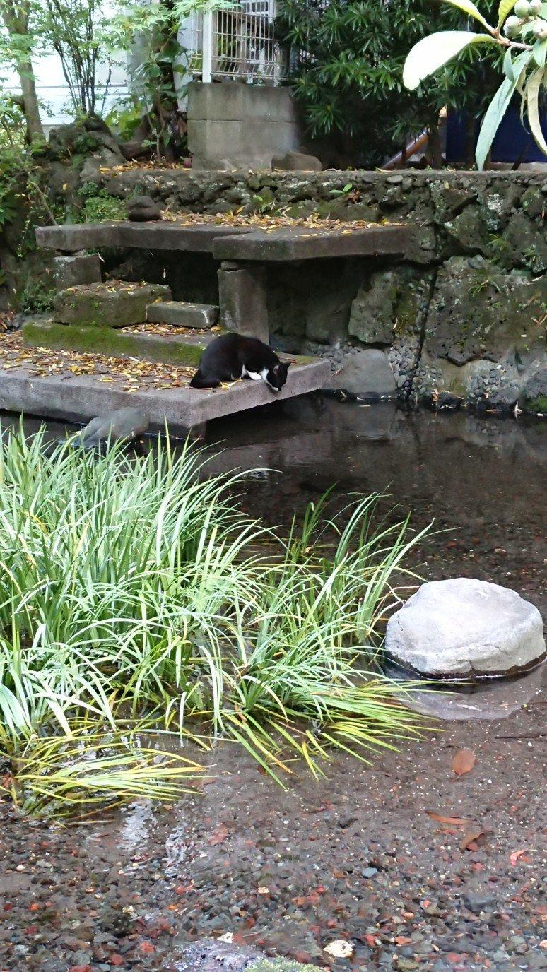 川を覗く猫
