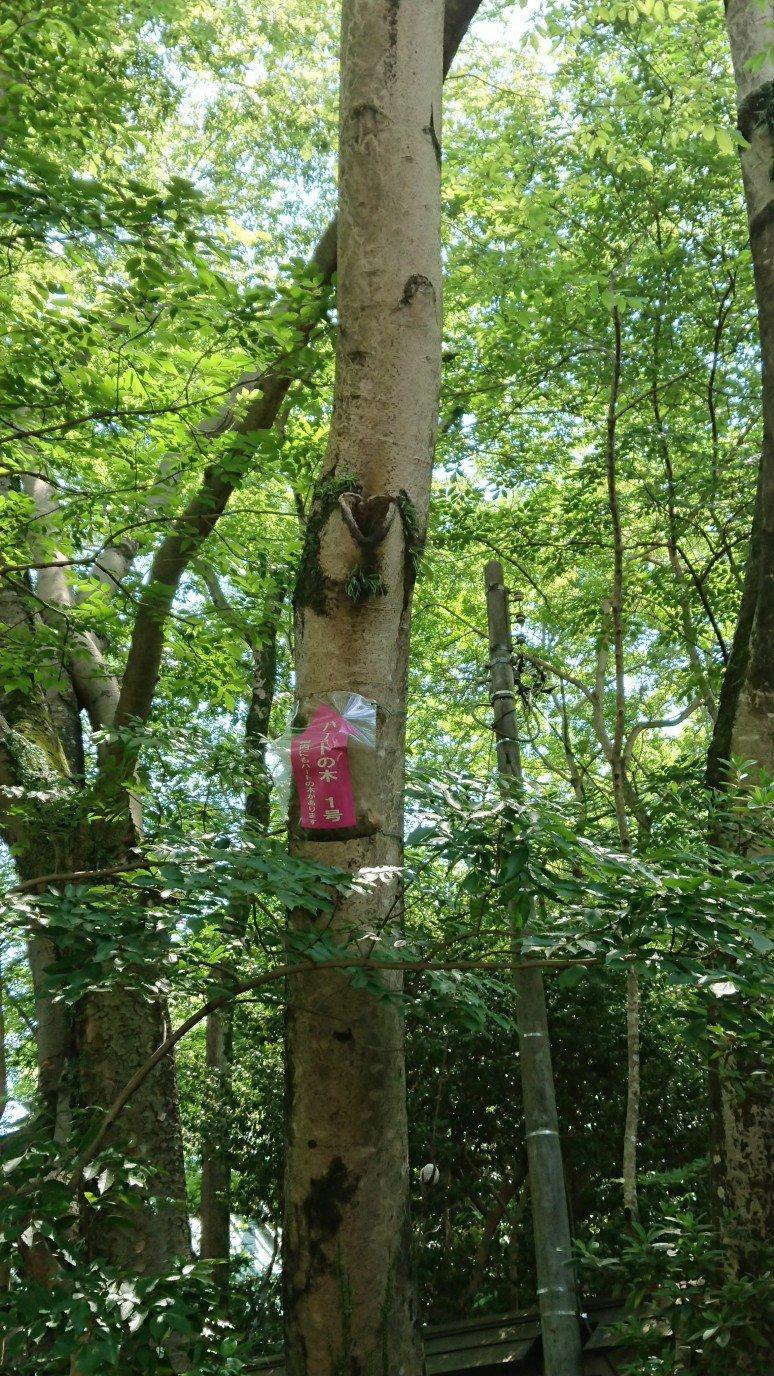 楽寿園ハートの木
