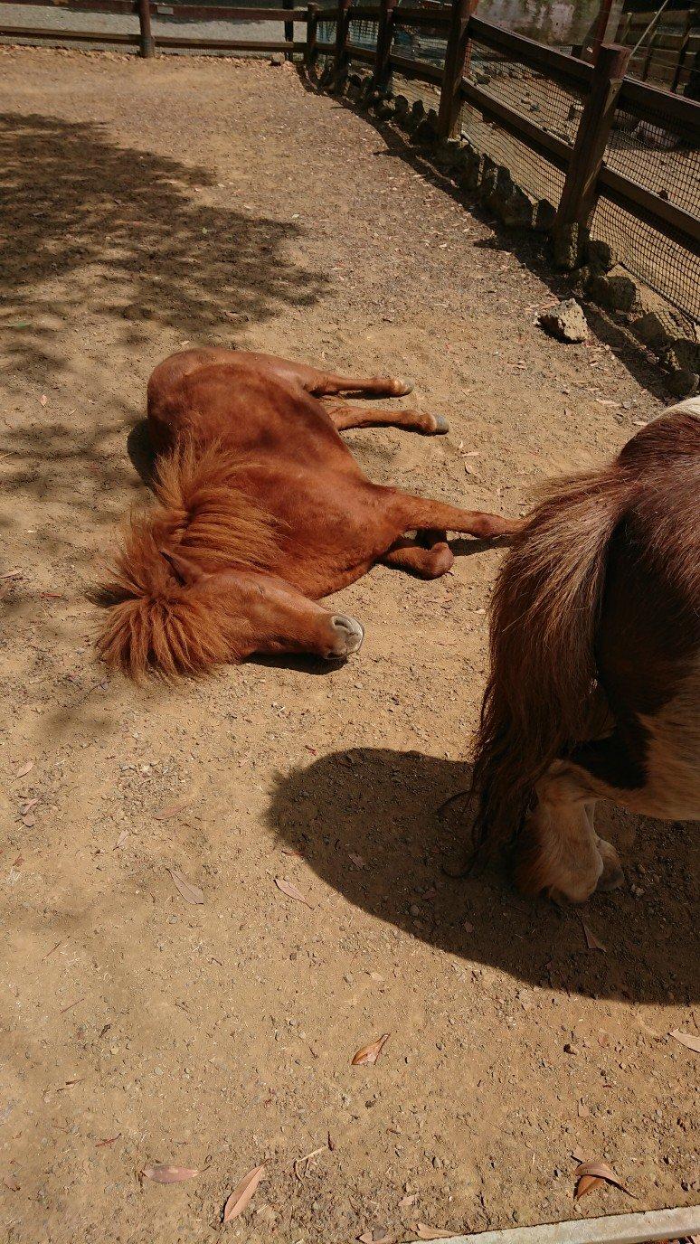 寝ている馬