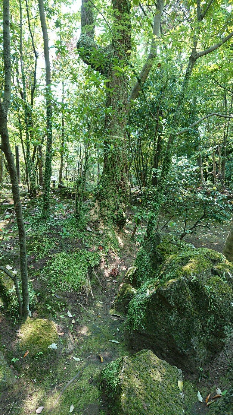 楽寿園の森